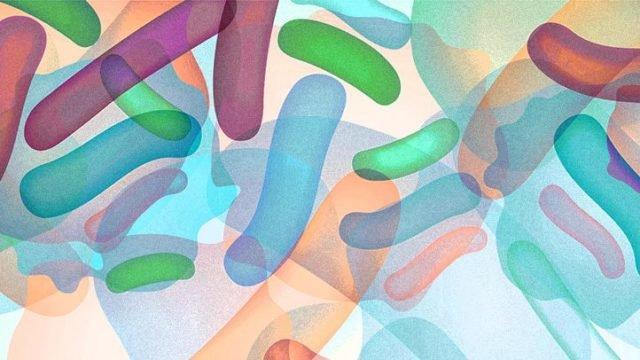 How microbiota influences oral health